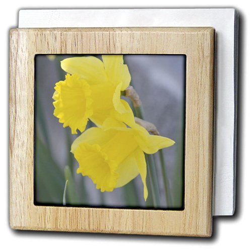 3dRose nh_48582_1 Two Yellow Daffodils- Spring Flowers- Phot