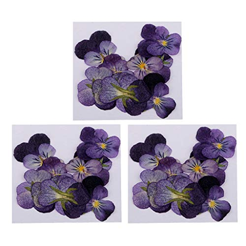 Fenteer 36 Pieces Natural Pressed Violet Real Dried Flowers Embellishments for Craft DIY Nail Art Jewelry Making DIY Pendants -