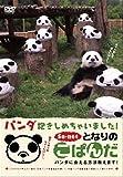 となりのこぱんだパンダ抱きしめちゃいました?パンダに会える方法教えます?  [DVD]