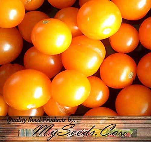 SUNSUGAR SUN SUGAR TOMATO SEED ~ SWEETEST TOMATO AVAILABLE ? - EXTREMELY SWEET - Very Early Cherry Tomato - 50 - 55 DAYS (0015 Seeds - 15 Seeds - Pkt. Size)