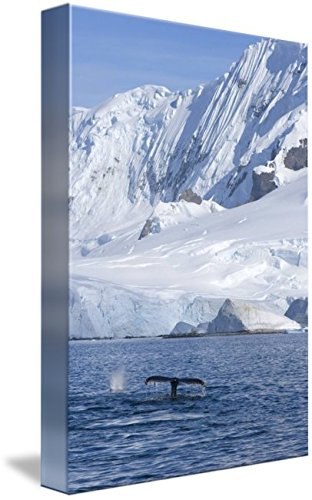 壁アート印刷entitled Humpback WhaleペアFeeding、Western南極ペンbyデザインPics 32