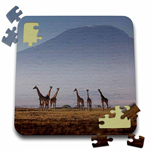 - Danita Delimont - Giraffes - Masai giraffes and Mount Kilimanjaro, Amboseli National Park, Kenya - 10x10 Inch Puzzle (pzl_276450_2)