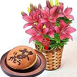 母の日 の プレゼント 花鉢 花とスイーツセット フラワーギフト (ユリ・カシス)