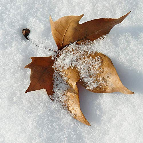 Artificial Snow Scatter Flakes –Ready to Use-No Prep Needed; Mountain Top-Like Fluffy Fallen Snow (Tm) (2) by Mountain Top-Like Fluffy Fallen Snow (Image #4)
