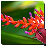 Liili Suqare Mousepad 8x8 Inch Mouse Pads/Mat IMAGE ID 33306081 Vriesea cultivars Bromeliaceae tropical America