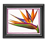 pictures of flower arrangements Bird Of Paradise Floral Flower Arrangement Wall Picture Framed Art Print