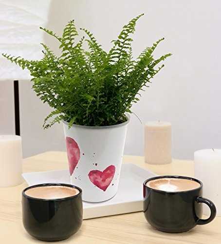 Costa Farms WaterWick Self-Watering Heart Design Planter w/ Premium Exotic Angel Live Indoor Love Fern Plant, 4.8-Inch Pot by Costa Farms (Image #4)