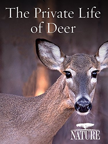 Nature: The Private Life of Deer ()