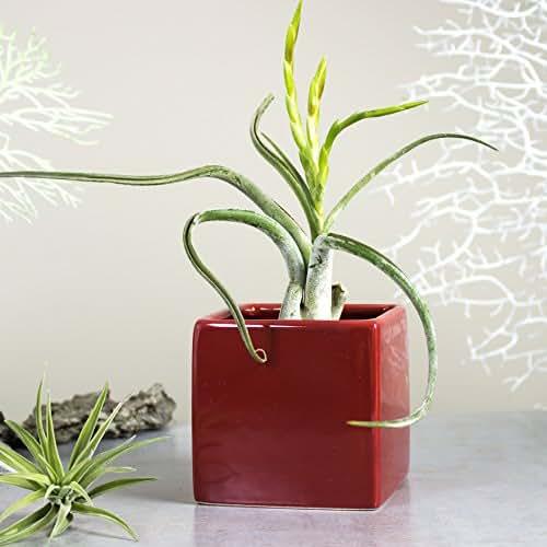 Amazon.com: Mini Planter Square Ceramic Vase, Cube