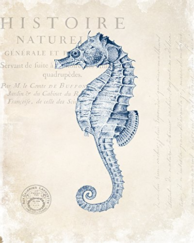 51FoFzcPW9L The Best Seahorse Artwork You Can Buy