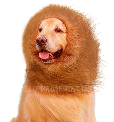 Lion  (Dog Costumes Lion King)