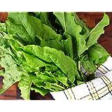 Seeds Herb Sorrel Broadleaves Organic Russian Heirloom Herb Seed