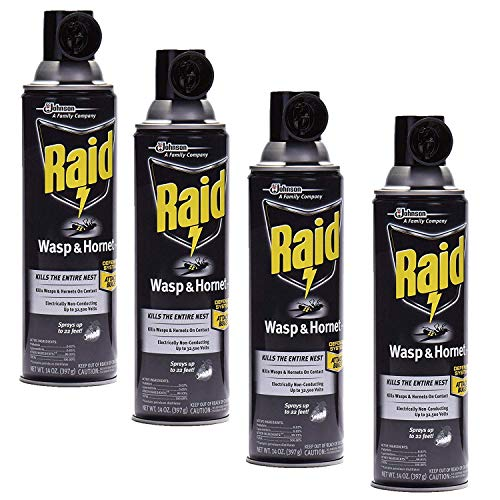 Raid Wasp and Hornet Killer, 14 oz, Liquid, Characteristic, 22 deg C, Spray Application Method, Pack of 4