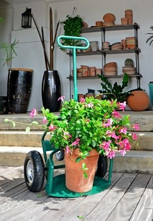 Potwheelz - Plant / Pot Mover with Fold Down Handle - Standard Model by Potwheelz