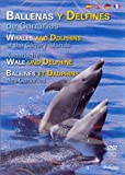 Whales and Dolphins of the Canary Islands (All Regions): Ballenas y Delfines de Canarias / Kanarische Wale und Delphine / Balienes et Dauphins des Canaries