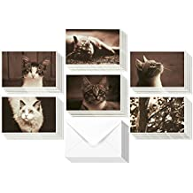 36 Pack Blank Note Cards – All Occasion Assorted Real Photograph Cat Images - With White Paper Envelopes Included 4 x 6 Inches