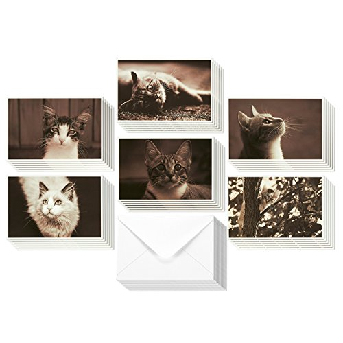 36 Pack All Occasion Assorted Blank Note Cards Greeting Card Bulk Box Set - Adorable Sepia Tone Cat Designs - Notecards with Envelopes Included 4 x 6 inches