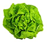 Buttercrunch Lettuce (aka Butter Head Lettuce) 1000+ Seeds....