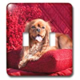 3dRose Danita Delimont - Dogs - Cavalier lying on red pillow, MR - Light Switch Covers - double toggle switch (lsp_258255_2)