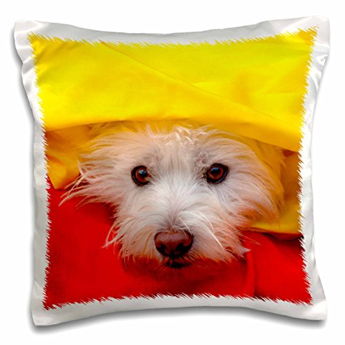 3dRose West Highland White Terrier Peeking Out of Yellow, Mr. and Pr,-Pillow Case, 16 by 16