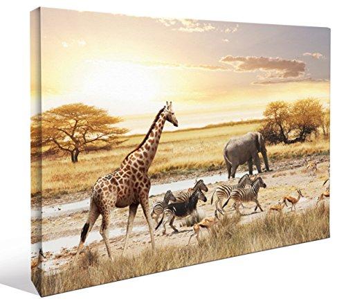JP London LCNV2209 African Animal Safari Plains Realism Found 2