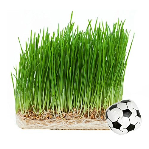 precious-pet-catgrass-1-lb-with-free-cat-toy-hard-red-wheat-grass-seed