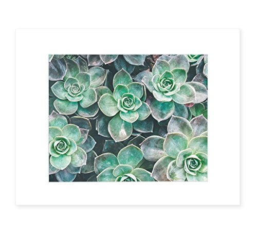 Fresh Green Succulent Floral Wall Art, Botanical Wall Decor, 8x10 Matted Photographic Print (fits 11x14 frame), 'Bed of Succulents' by Offley Green