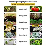 100W LED Grow Light Bulb - White Full Spectrum