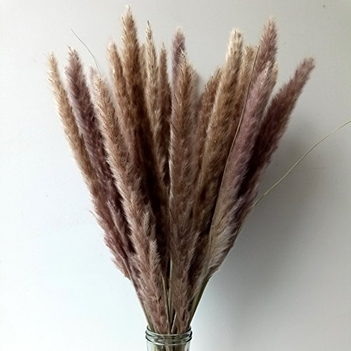 "Dongliflower 30 Pcs Dried Natural Pampas Grass, Phragmites Communis,24"" Tall for Home Decor (natural) - Preserved Grass"