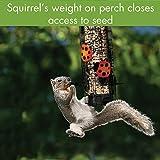 Audubon NA32441 Squirrel-Resistant Ladybug Design Tube Feeder
