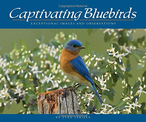 Captivating Bluebirds: Exceptional Images and Observations (Wildlife Appreciation)