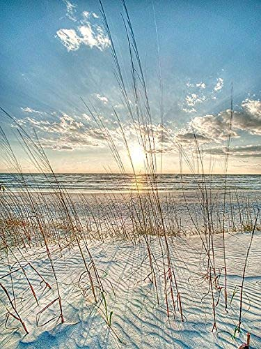 Among the Grass Robert Jones Photography Coastal Ocean for sale  Delivered anywhere in USA