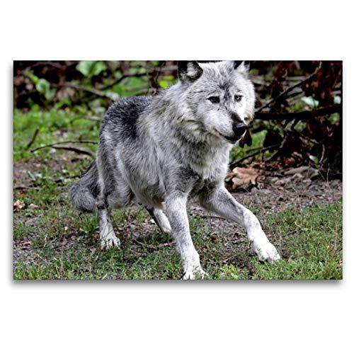 CALVENDO Toile en Textile de qualité supérieure - Motif : « Die Wolf » - Impression sur Toile - Motif : Animaux de 120 x 80 cm
