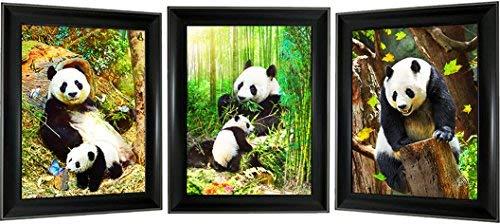 panda pictures - 8