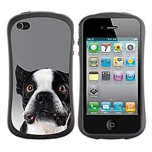 LASTONE PHONE CASE / Suave Silicona Caso Carcasa de Caucho Funda para Apple Iphone 4 / 4S / Funny Cute Dog Bulldog