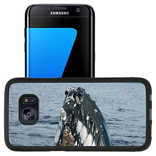Luxlady Premium Samsung Galaxy S7 Edge Aluminum Backplate Bumper Snap Case IMAGE ID: 31626563 Humpback whale head comuing up in deep blue polynesian - Target In Maui