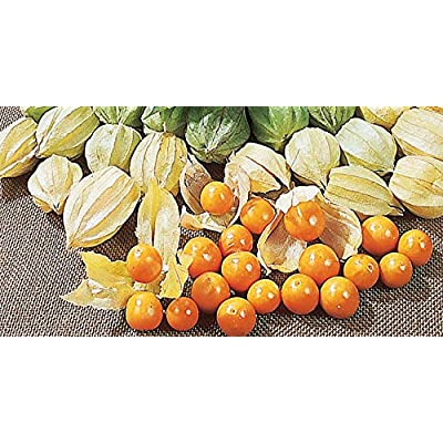 5-Gram BigPak 5g to 20g Giant POHA Berry (CDK) Seeds; Cape Gooseberry; Ground Cherry; Physalis Peruviana; Goldenberry, Husk Cherry : Garden & Outdoor