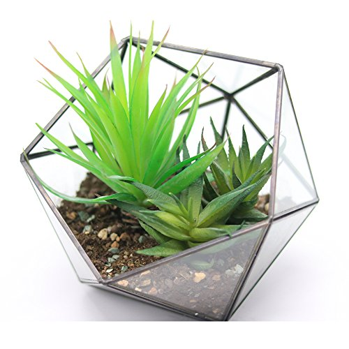 Modern-Tabletop-Black-Glass-Pentagon-Geometric-Terrarium-Container-Window-Sill-Decor-Flower-Pot-Balcony-Planter-Diy-Display-Box-for-Succulent-Fern-Moss-Air-Plants-Mniature-Fariy-Garden-Gift-No-Plant