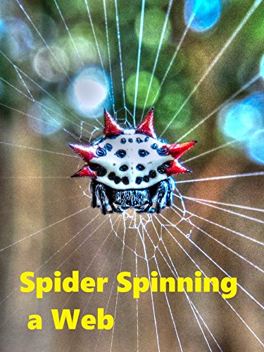 Spider Spinning a Web ()