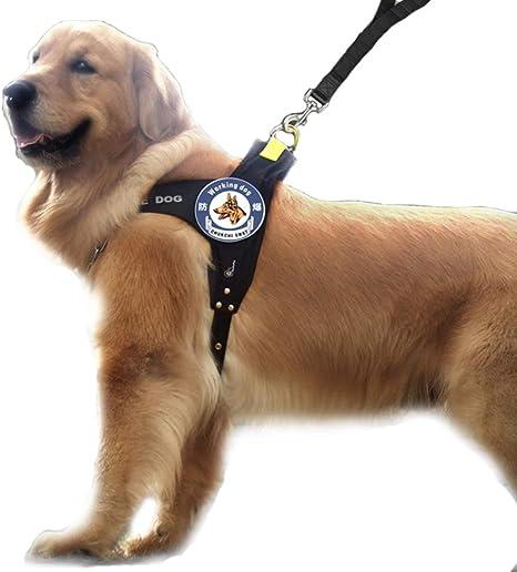 DINGG Arnés para Perros, arnés de Chaleco para Mascotas Ajustable ...