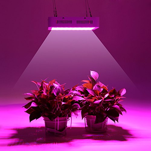 LED grow light,300W (1003W) Plant Grow Light, Double Chips Super Bright Full Spectrum Hydroponic Medical Plant Grow Lights for Indoor Garden Hydroponic Greenhouse Flower by Innov