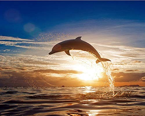 YEESAM ART DIY Paint Numbers Adults Beginner Kids, Dolphin Sunset Seascape 16x20 inch Linen Canvas Acrylic Stress Less Number Painting Gifts (Dolphin, Without Frame)