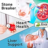 Chanca Piedra (1100 mg) High Potency Kidney Stone