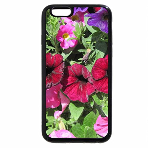 iPhone 6S / iPhone 6 Case (Black) Flowers in Hanging Basket 23