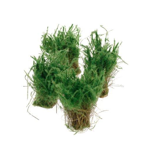 Scenery Landscape Model Waterweeds Plants