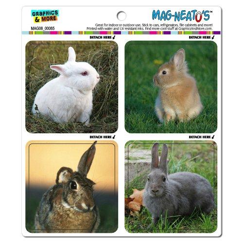 Graphics and More Cute Bunny Rabbits Mag-Neato's Automotive Car Refrigerator Locker Vinyl Magnet Set