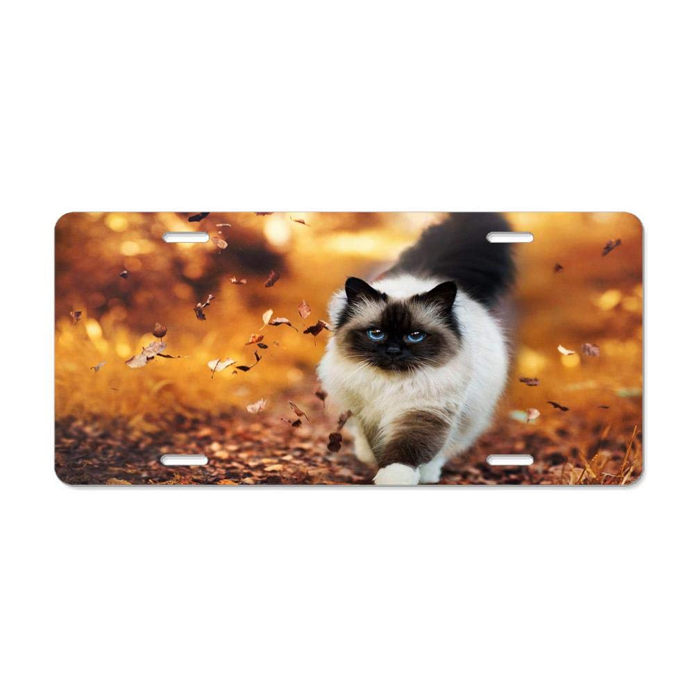 Metal Car Tag Cover for Women//Men FloralFlames Himalayan Cat Custom Aluminum License Plate Tag for Auto Cars 12 x 6 Inch
