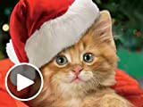 Amazon eGift Card - Karoling Kittens (Animated) [American Greetings]