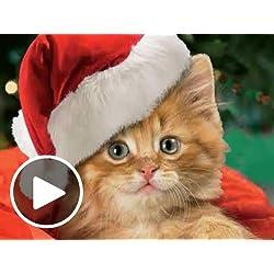 Karoling Kittens