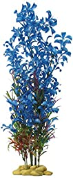 Aquatic Creations Hygrophilia Aquarium Plant, 15-Inch, Blue